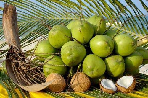 Chiêm bao mơ thấy trái dừa là số mấy? đánh con gì?