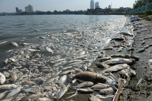 Chiêm bao mơ thấy cá chết là số mấy? đánh con gì?
