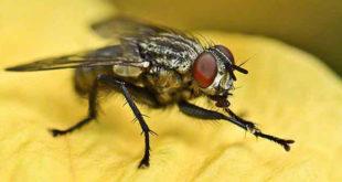 Chiêm bao mơ thấy con ruồi là số mấy? đánh con gì?