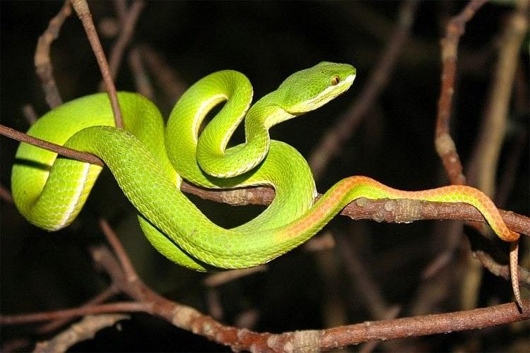 Chiêm bao mơ thấy rắn xanh là số mấy? đánh con gì?