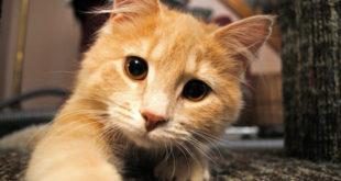 Mèo kêu có điềm gì? có xui không? đánh con gì?