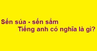 Sến súa - sến sẩm dịch sang tiếng anh có nghĩa là gì?